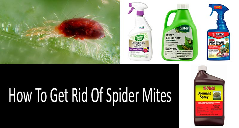 kill a mite insecticide instructions